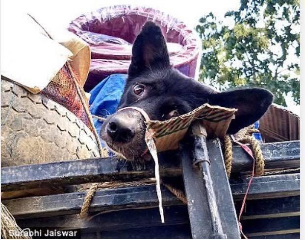 インド:犬猫肉食ナガランド地方!