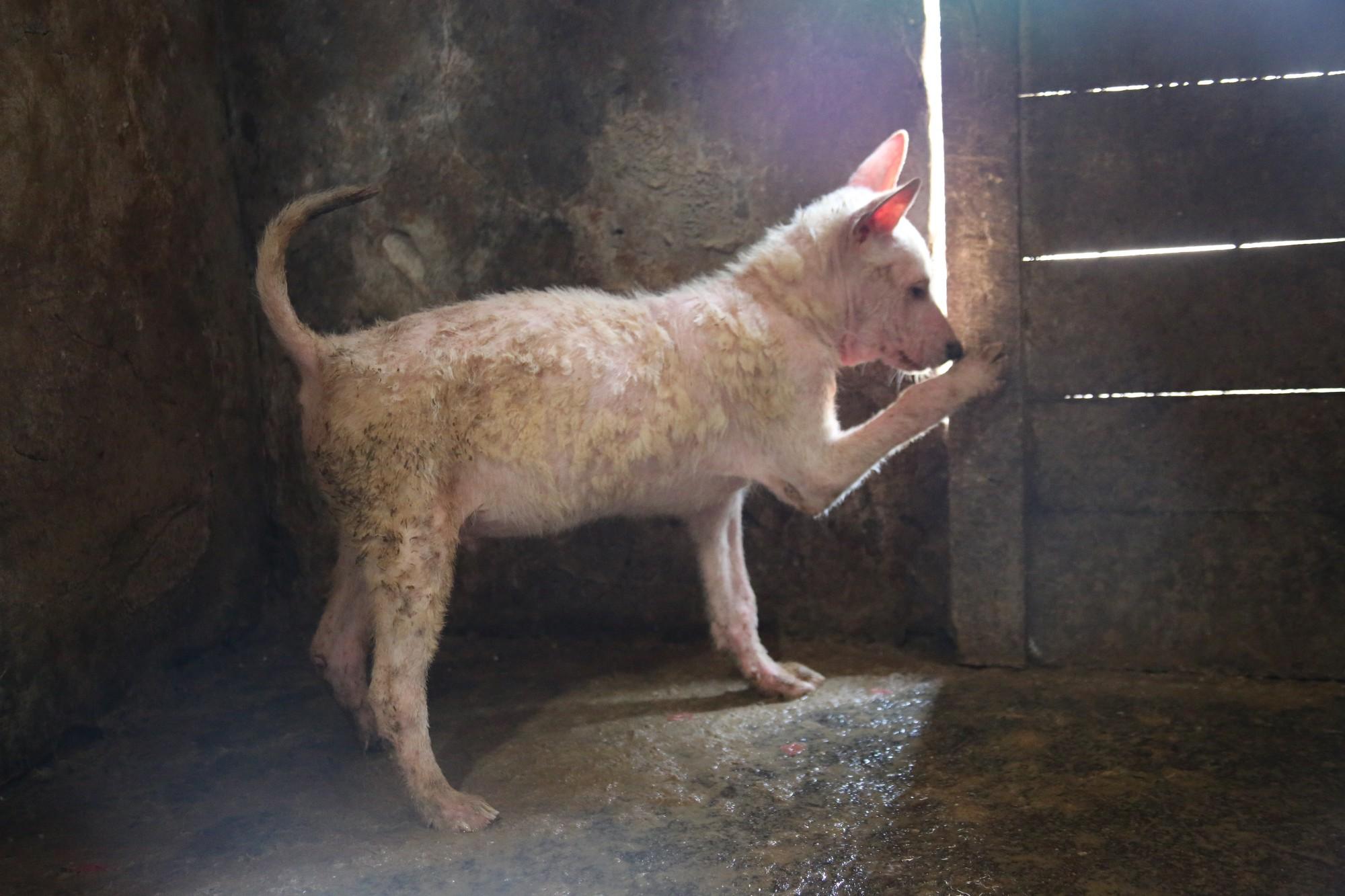 THE・中国犬肉産業