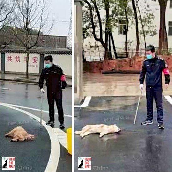 中国政府による無差別犬狩り‼