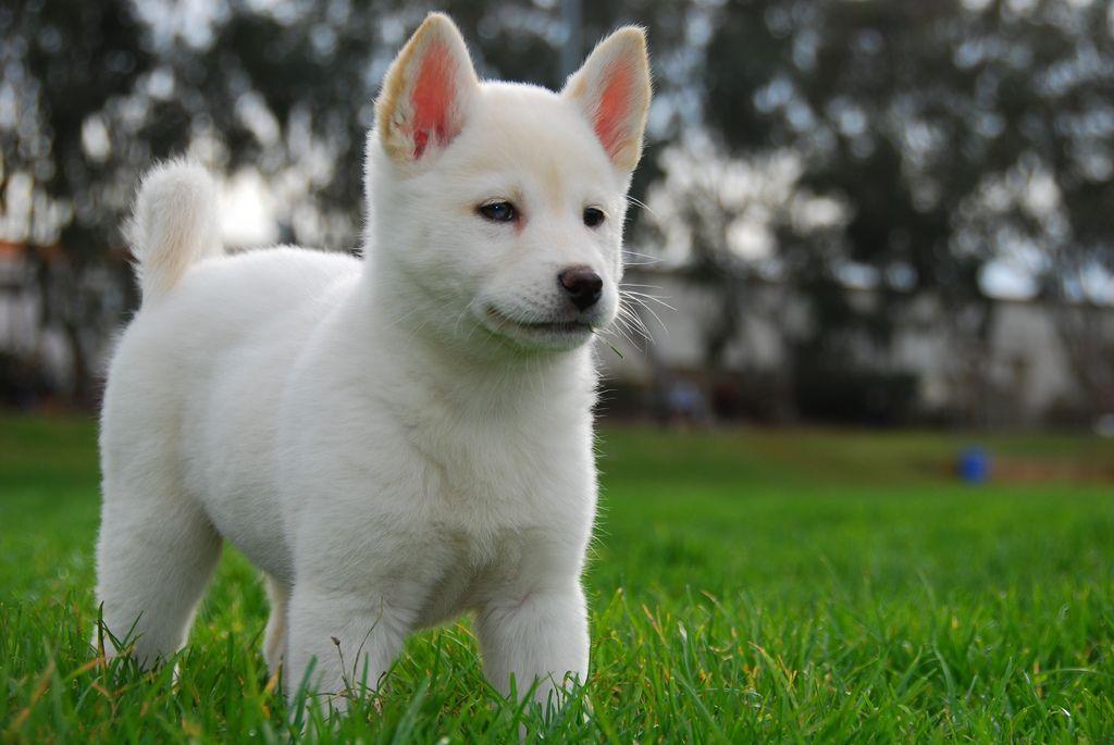 韓国:犬を家畜化するな!