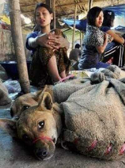 インド:囚われた若い犬 袋の中で何思う