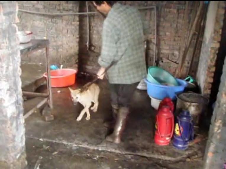 ベトナム:犬肉店の裏側を暴露