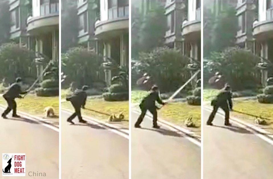 中国またか❓政府による無差別野犬狩り‼