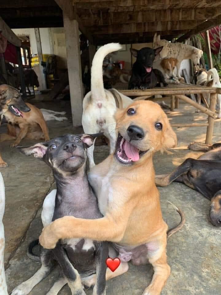 中国の歴史:犬猫肉 犬食 猫食は他国の食文化ではない
