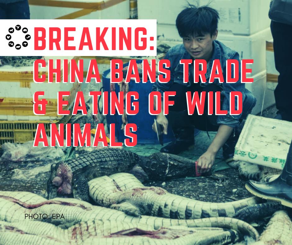 中国:初の犬猫肉ゼロの市誕生か‼❓