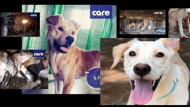 【署名】犬肉保護犬が日本にやって来る!