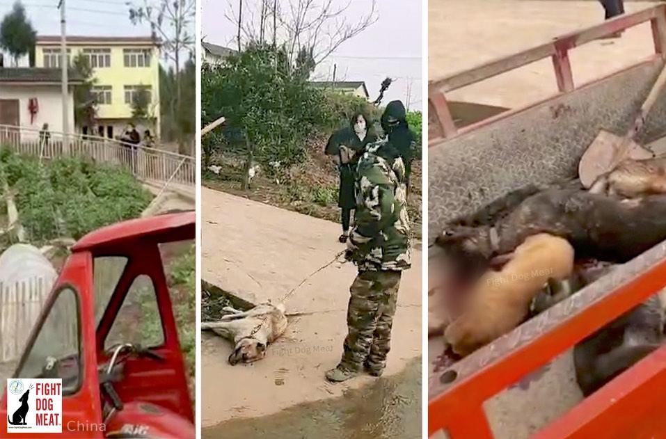 甚だ呆れる政府の犬猫殺し‼