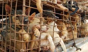 ベトナム:1000頭の犬たちの行方