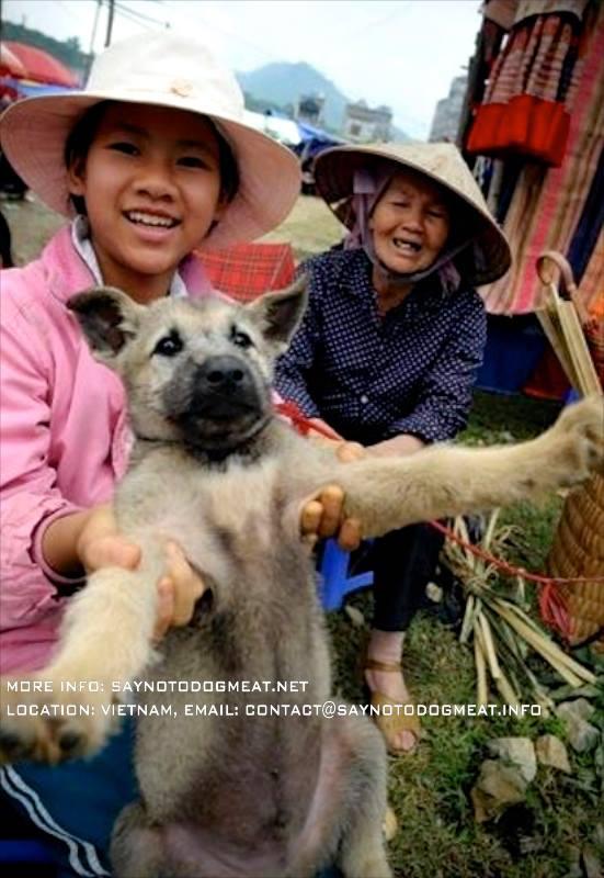 ベトナム:コレラ勃発 犬肉が原因で