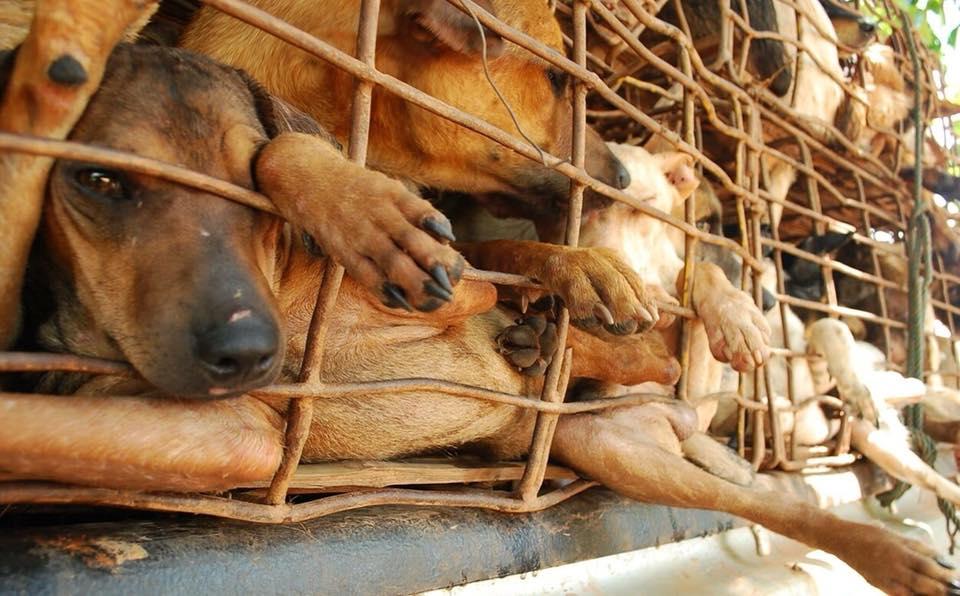 ベトナム:ハノイ2021年より犬肉禁止に!