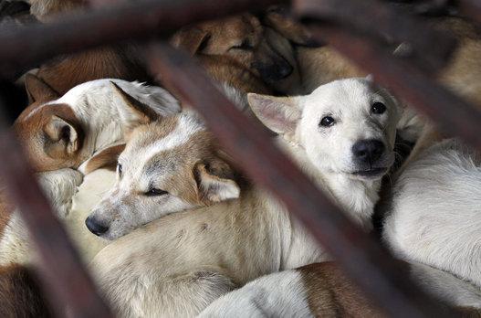 ベトナム:ホーチミン市犬肉反対を表明!