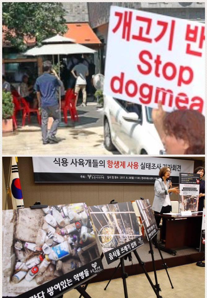 クリック:韓国初の犬肉調査!