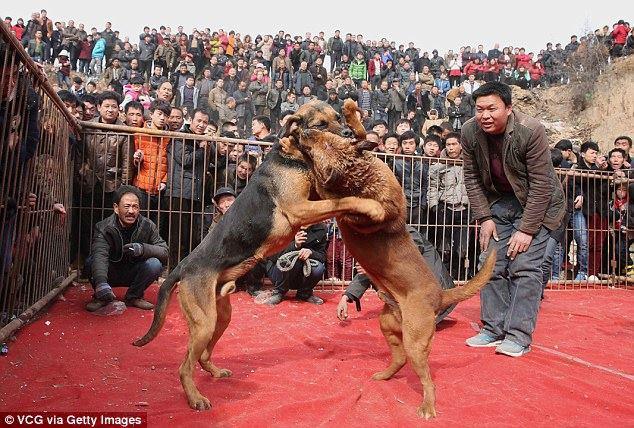 中国:戦わないと人間に生かせてもらえない!