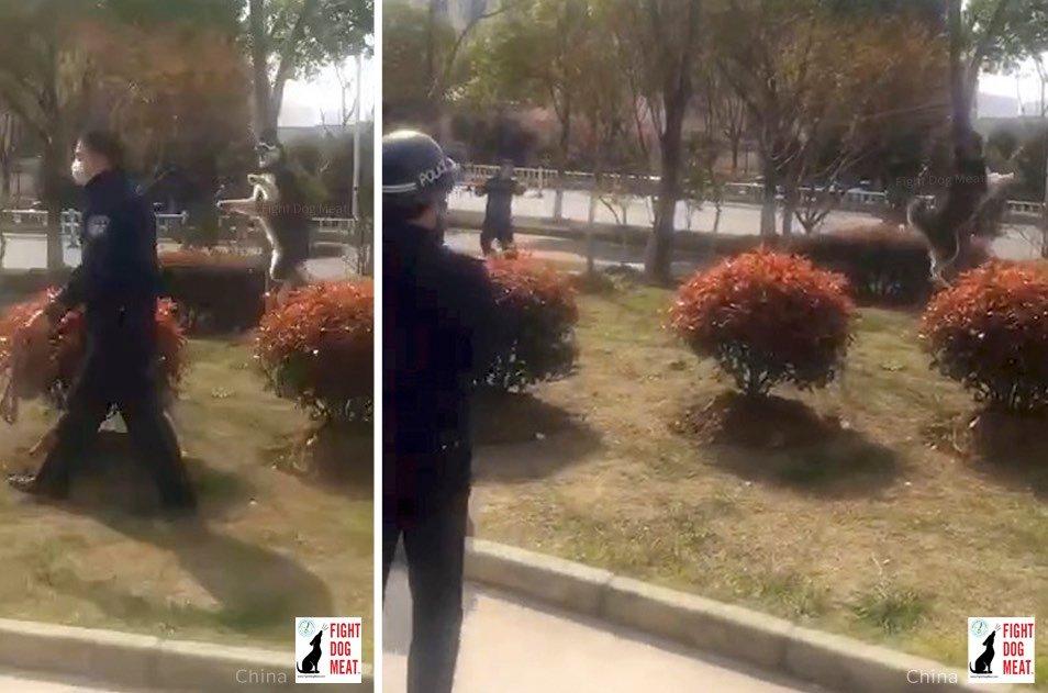 中国警察:公園で真昼間から犬の首吊る!