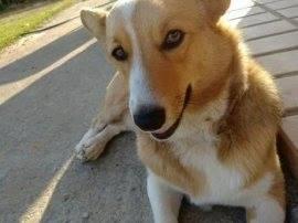 韓国:ペット犬が隣人に食べられていた‼