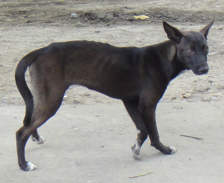 犬肉違法のフィリピン しかしその実態は!?