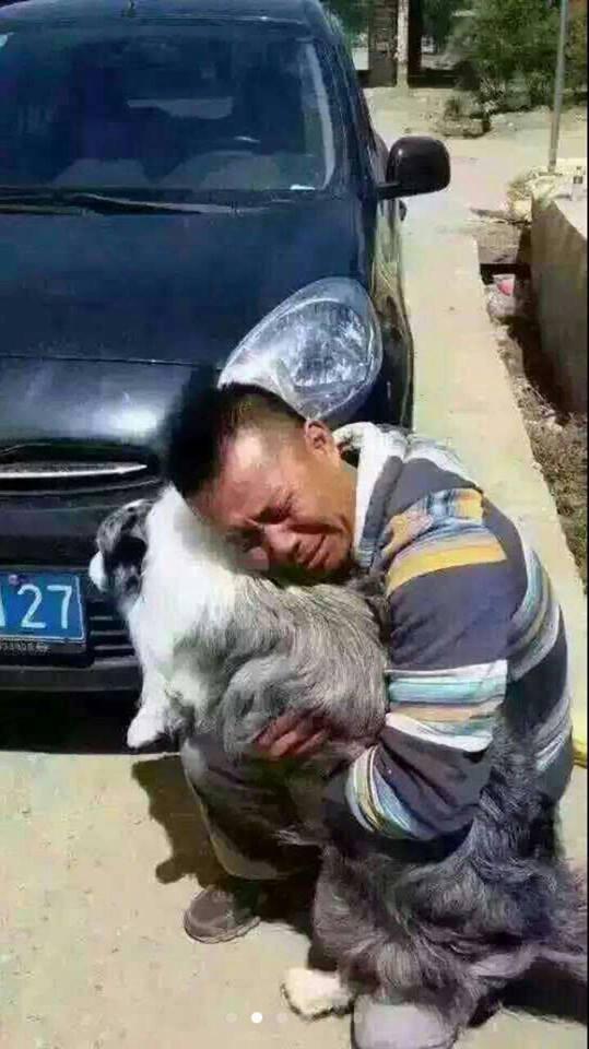 中国:政府による突然の一方的過ぎる犬の禁止!