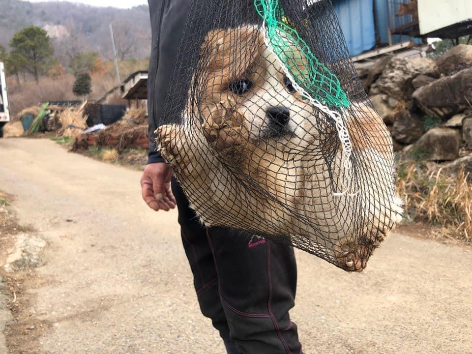 韓国:貝網に入れられ犬肉に売られた仔犬