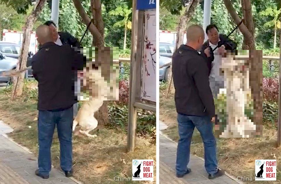 中国:白昼堂々と犬を首吊る!