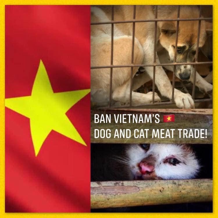 その2:ベトナム政府にハガキを書く