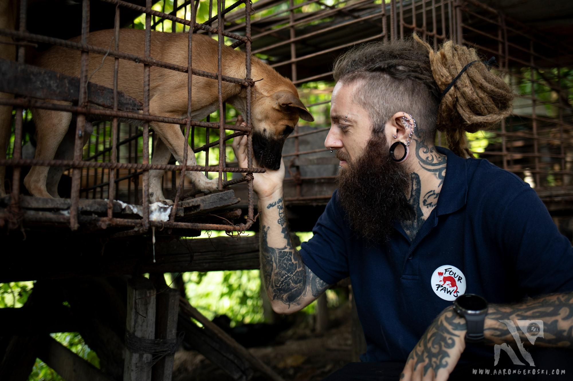 カンボジア:残酷過ぎる犬肉産業