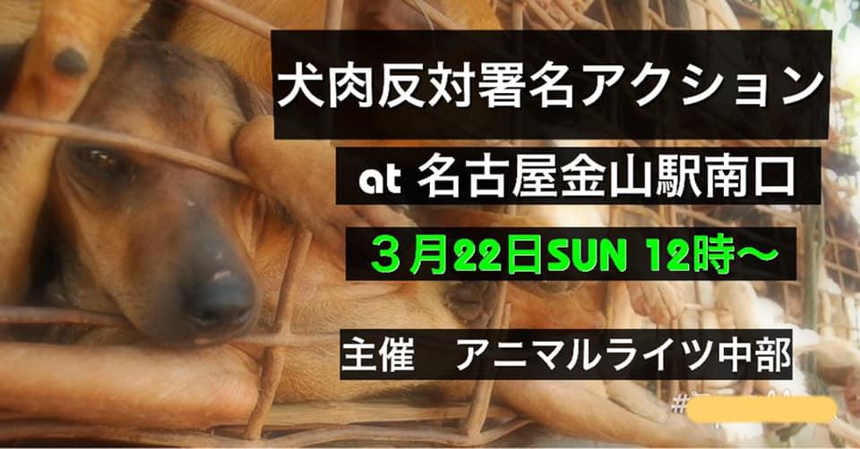 in 愛知県 犬肉反対アクション! 2020年3月22日