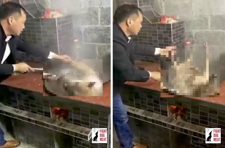 中国:早速 犬肉を再開‼COVID19で世界中が危惧している中‼