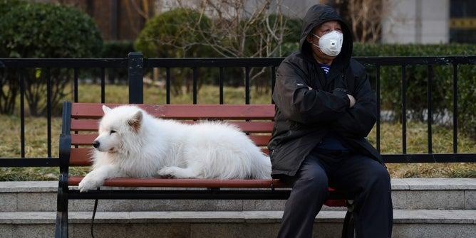 中国:野外の犬を殺したら3000円などがもらえる💢