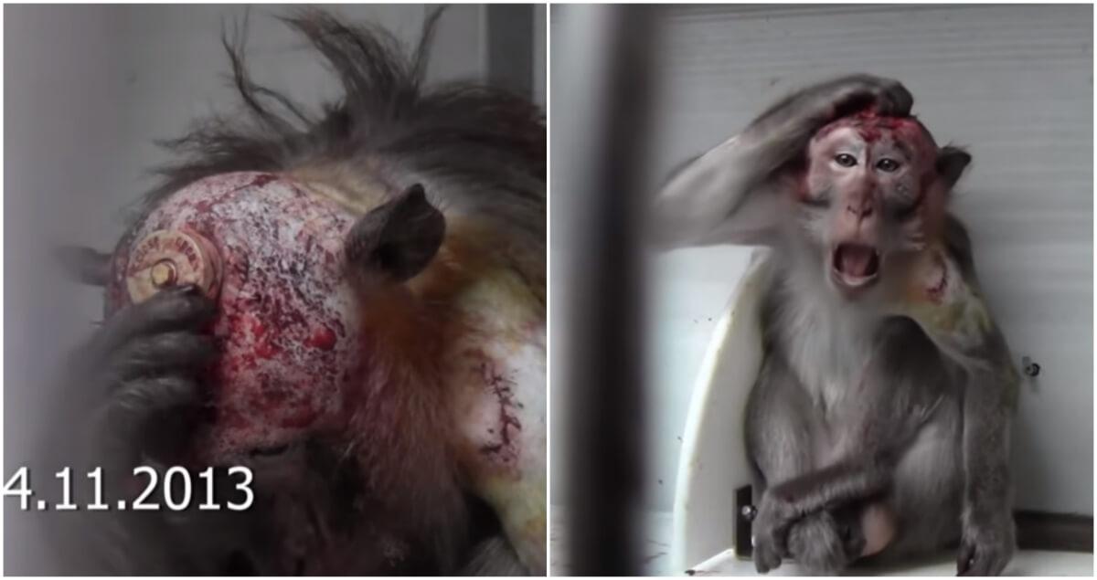 中国:動物虐待目的で中国に引っ越す動物実験科学者!