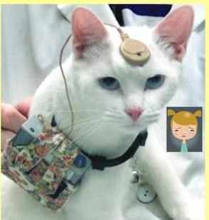 日本:老舗動物実験会社倒産‼ 動物愛護の抗議が影響して