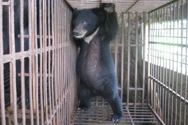中国:野生動物疾病治療に野生動物利用!