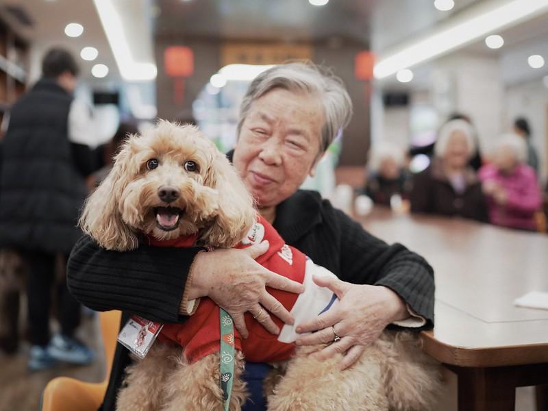 中国:犬肉フリー2番目の都市誕生!