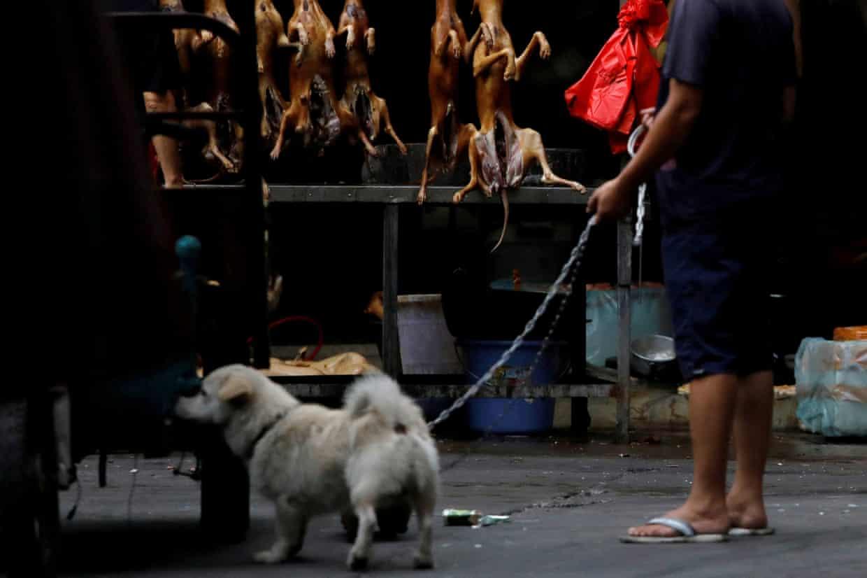 中国: 犬猫食ついに禁止に❓