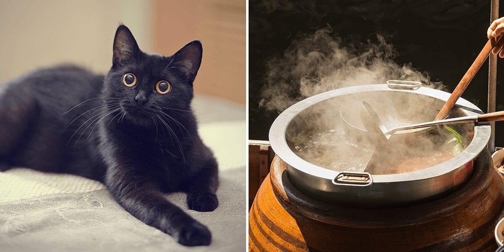 ベトナム:新型コロナのせいで黒猫が虐殺される‼