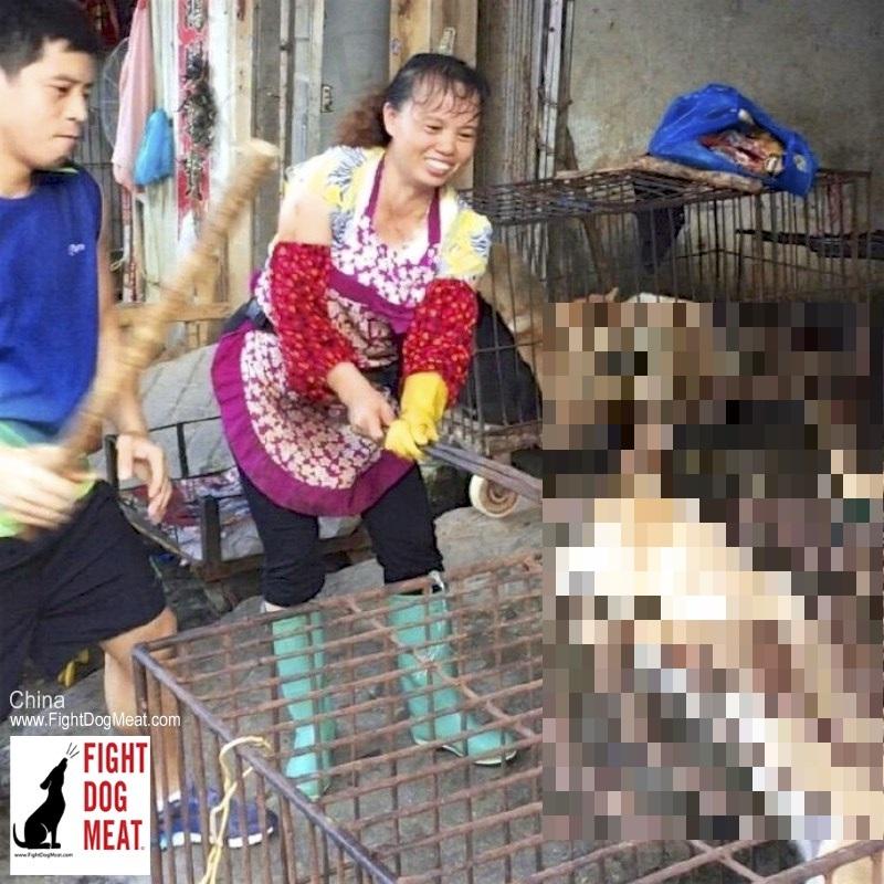 中国 冷酷非道な犬肉夫婦からの挑戦状‼