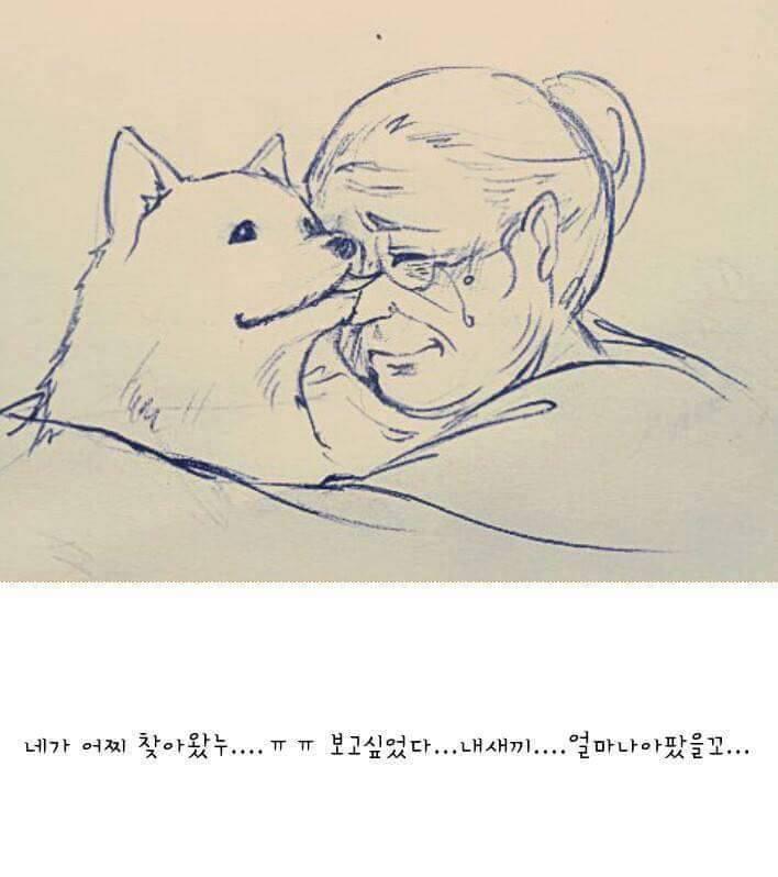韓国:国民の半数以上は自国の犬食文化に心を痛めている!