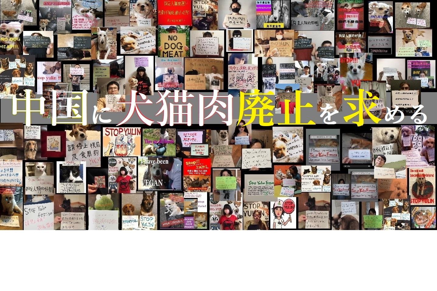 中国の習近平主席宛てハガキアクション 2020年犬猫肉を廃止せよ