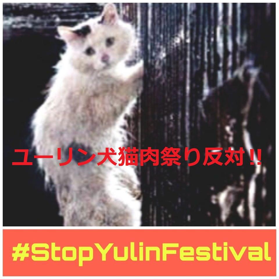中国:盗まれたペット猫 ハルちゃん