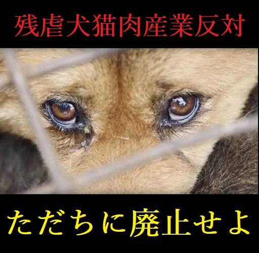 中国:ユーリン犬肉祭り開催される‼