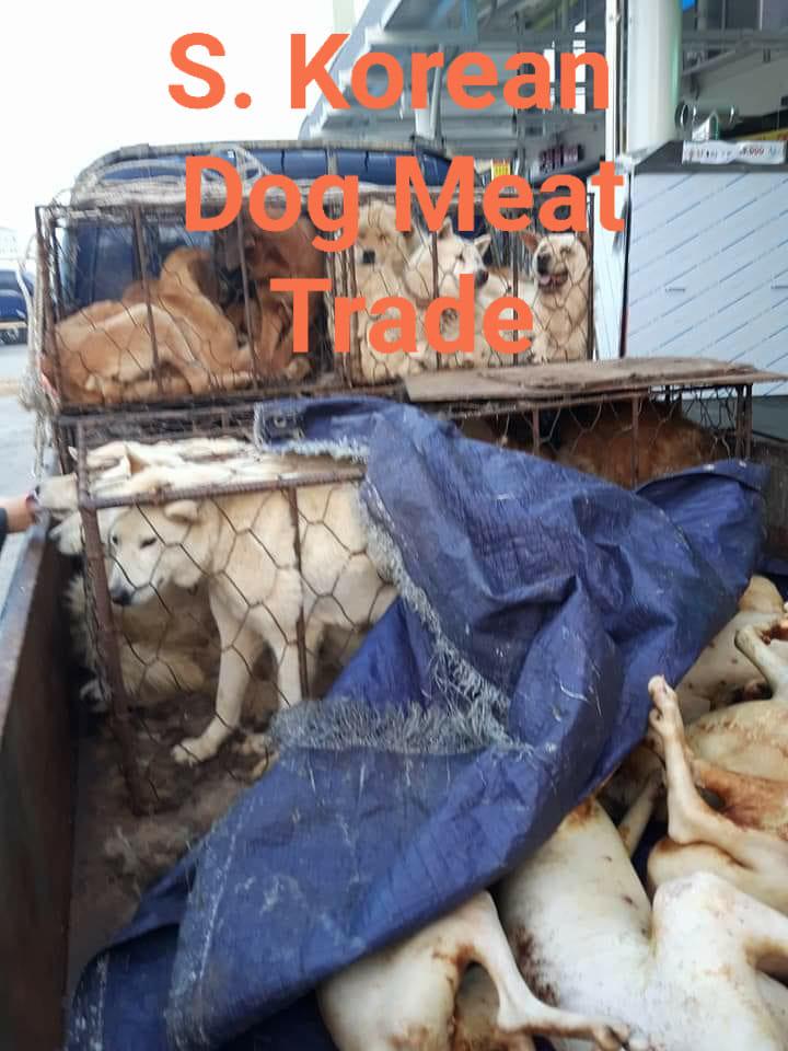 韓国:犬食は他国の食文化ではない!若い世代はすでに放棄‼
