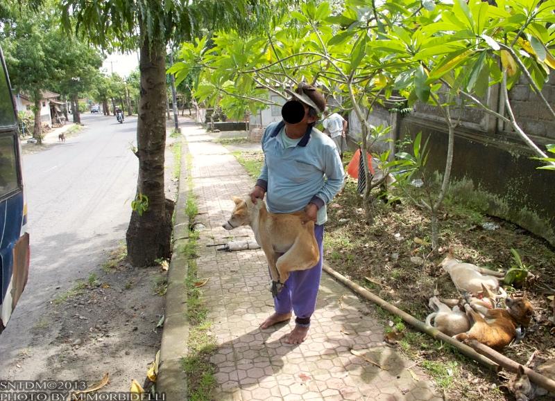 圧倒的多数のイスラム教徒のインドネシアで誰が犬食を!? インドネシア犬肉事情