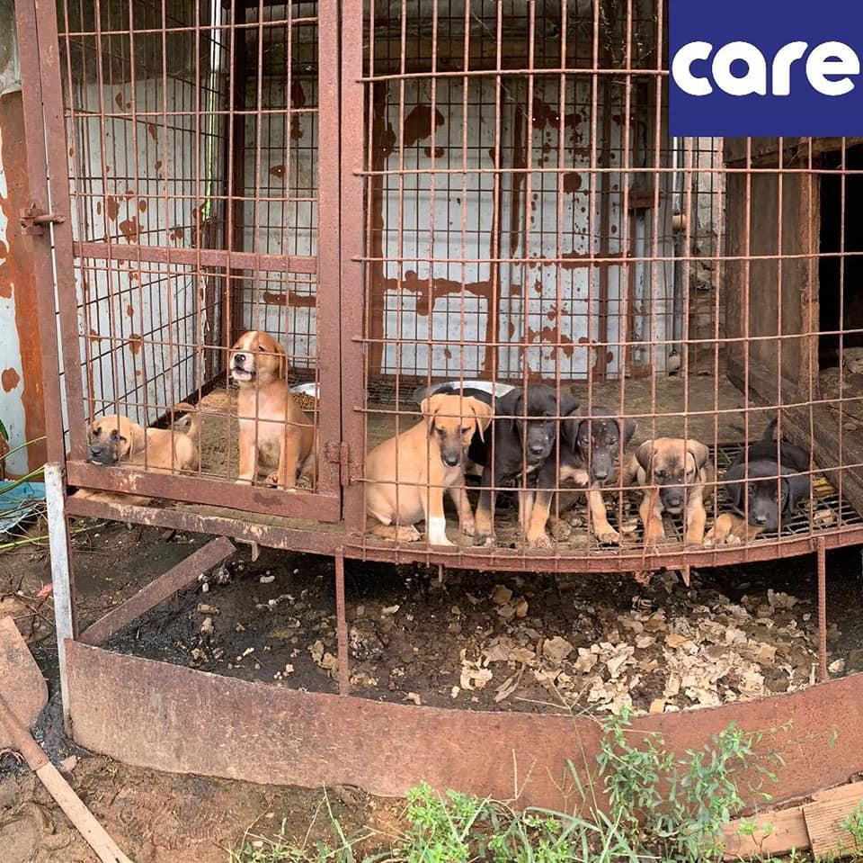 劣悪!ロッテ関連犬農場:大怪我を負った母犬!手術日に仔犬3匹が死んでしまう!