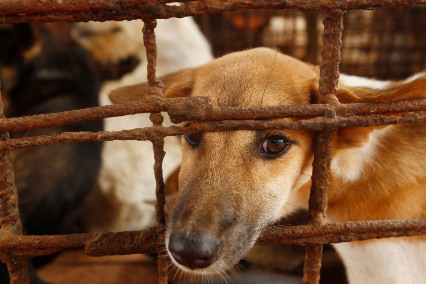 カンボジア 罪の意識より:犬肉商売から足をあらった人たち