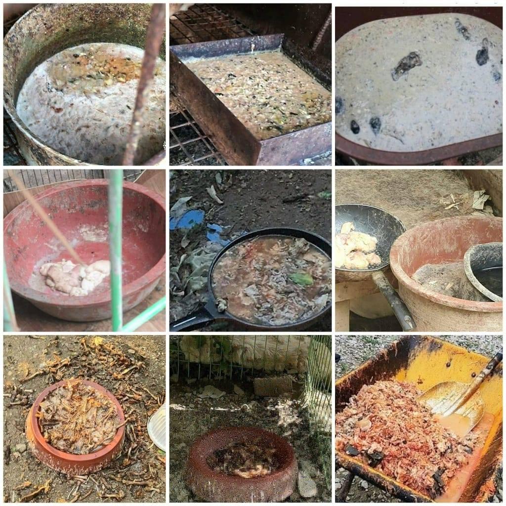韓国 犬肉農場 犬たちのエサは腐った残飯‼ロッテ牧場の犬たちにも‼