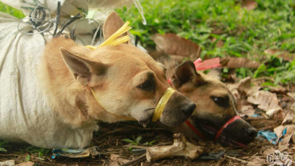インドネシア ソロ市が犬肉禁止に‼