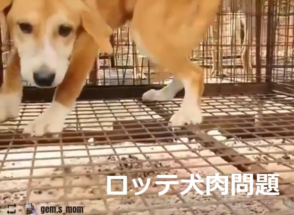 ロッテ 犬肉 犬食問題:当局は「2021年1月4日までにすべて撤去する!」「ロッテの犬を守る市民の会」は窮地に陥る ロッテは何をしている!?