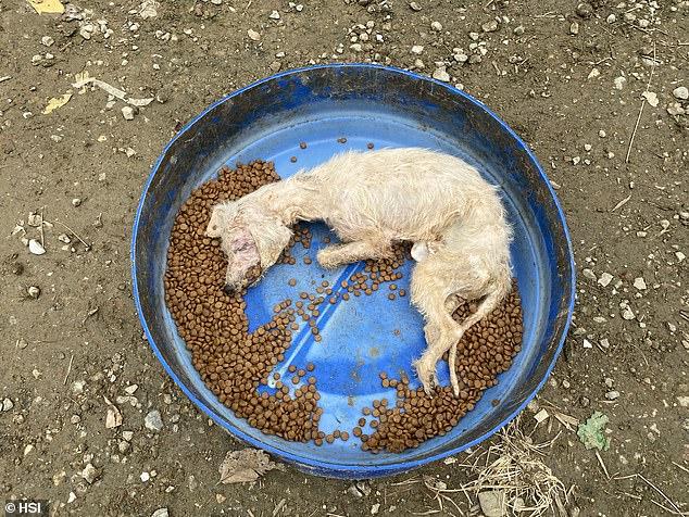 韓国犬肉農場そこは犬たちの生き地獄であった