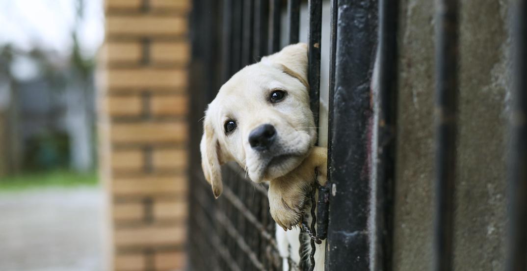 韓国 - 最新世論調査発表‼84%の韓国市民 「犬肉なんか食べません‼」