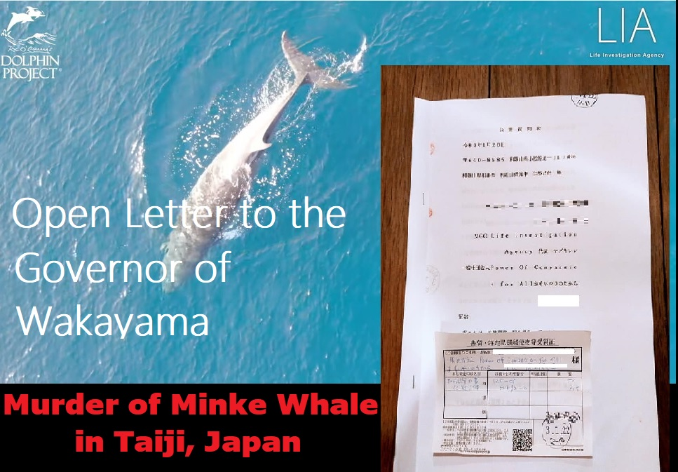 Murder of Minke Whale in Taiji: Open Letter to the Governor of Wakayama