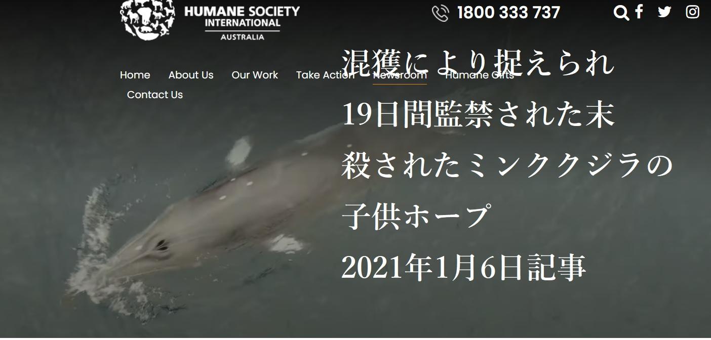 太地の漁網に2週間閉じ込められたミンククジラへの恐怖が高まる